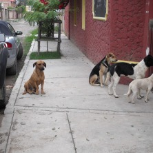 These dogs come with the kids and wait till the kids leave.